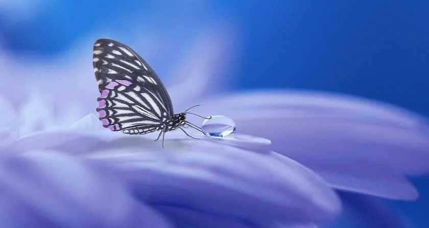 La mariposa y la muerte del jilguero