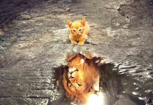 cat-3809563__480_compress301104362235811504706.jpg